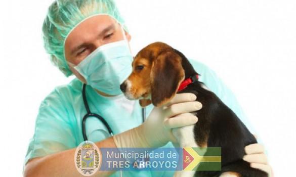 imagen 1 de la noticia VACUNACION ANTIRRÁBICA CANINA Y FELINApublicada el 2021-08-18