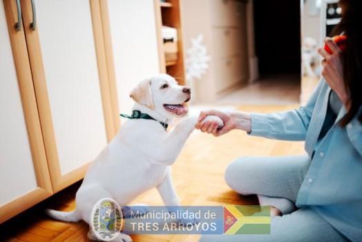 imagen 1 de la noticia Taller gratuito de primeros auxilios de la salud comportamentalpublicada el 2020-04-27